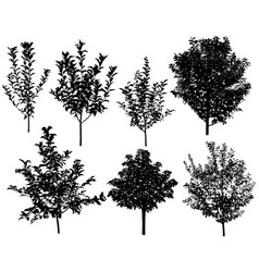 collection silhouettes trees vector image