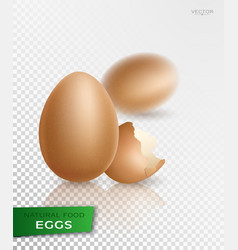 realistic egg vector image