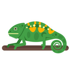 flat style of chameleon vector image vector image
