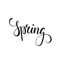 hello spring hand drawn calligraphy and brush pen vector image vector image