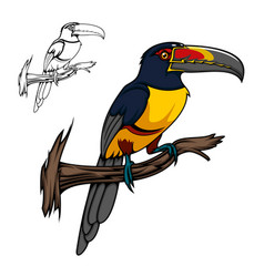 aracari tropical cartoon toucan bird vector image
