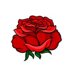 beautiful bright red rose tattoo artwork nature vector image