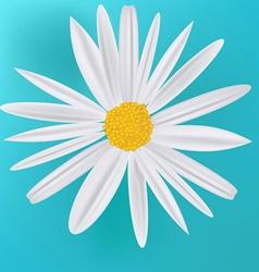 Daisy flower icon vector