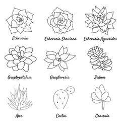 Hand drawn set succulent in style outline doodle vector