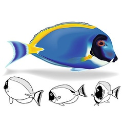 Powder Blue Tang Set vector image