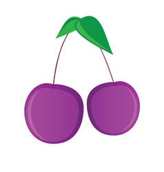 purple cherry vector image