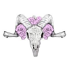Goat Skull vector