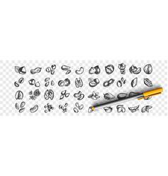 nuts doodle set vector image