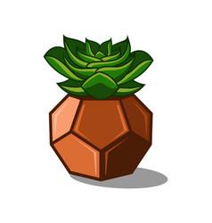 Succulent vector
