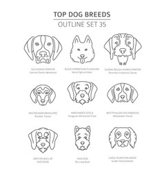 top dog breeds hunting dogs set pet outline vector image