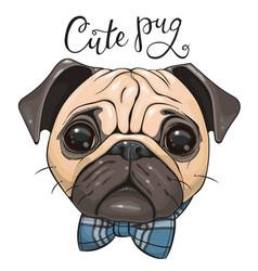 Cartoon pug dog with a bow tie isolated on a vector