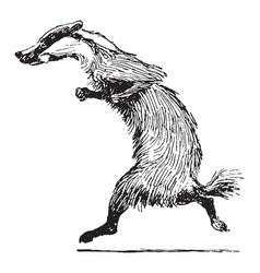 Reynard the fox grimbard running vintage vector
