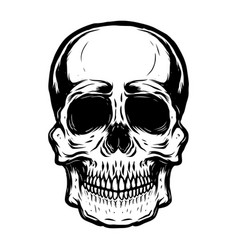 Hand drawn human skull on white background vector