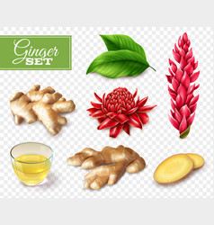 Ginger transparent background set vector