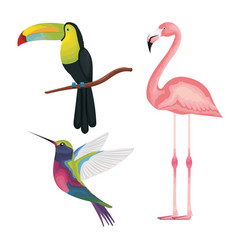 tropical and exotics birds vector image