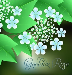 Flowering viburnum with green leaves in the vector image