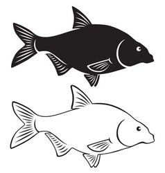 bream fish vector image