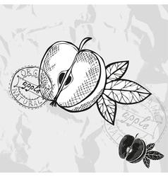 Hand drawn decorative apple vector