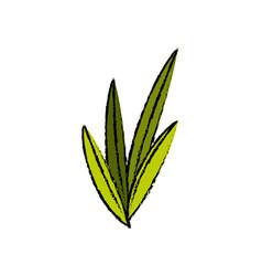 leaves plant nature foliage botanical image vector image vector image
