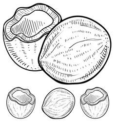 doodle coconuts vector image