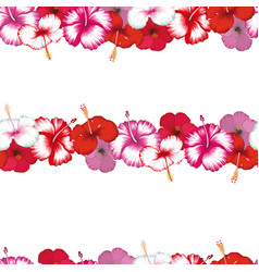exotic stripes flowers hibiscus white vector image