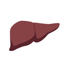 Human liver medical medicine anatomy organ human vector