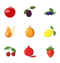 Orchard fruits icons set cartoon style vector image