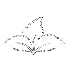 Plant with leaves vector