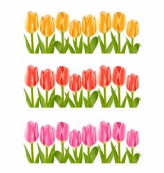 colour tulip flowers set vector image