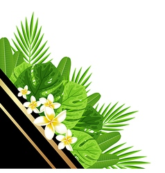 Decorative summer background with green leaves vector