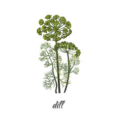 flat cartoon sketch hand drawn dill vector image