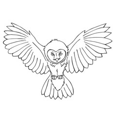 hand drawn owl vector image