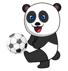 panda with football ball on white background vector image