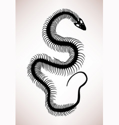 Snake bone skeleton a silhouette showing a big vector