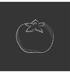 Tomato Drawn in chalk icon vector
