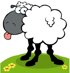 Black Sheep Sticking Out His Tongue On A Hill vector image
