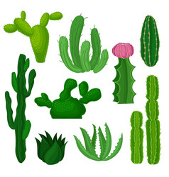 cacti succulents and euphorbias set beautiful vector image
