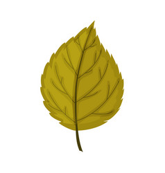 autumn leaf isolated on a white background vector image