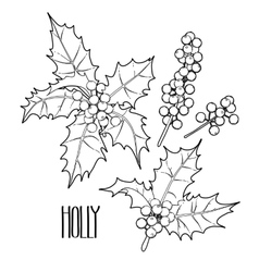 Graphic holly collection vector image