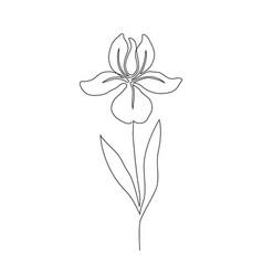 iris flower on white vector image