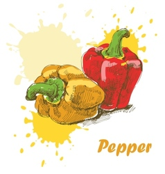 Pepper background vector