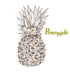 Pineapple hand drawn sketch vector