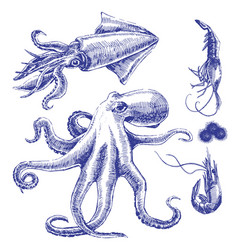 Sea set with octopus squid shrimps vector