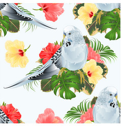 seamless texture budgerigar blue pet parakeet vector image