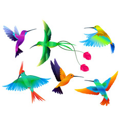 tropical birds hummingbirds toucan colored parrot vector image
