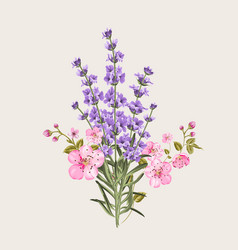 lavender and sakura flowers vector image