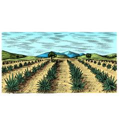 agave field vintage retro landscape harvesting vector image