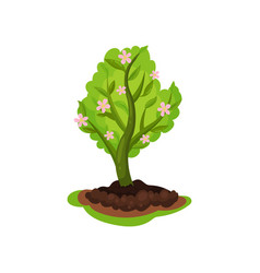 blooming apple tree with bright green leaves and vector image