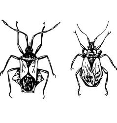 Bug coreidae vector