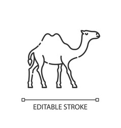 Camel pixel perfect linear icon vector